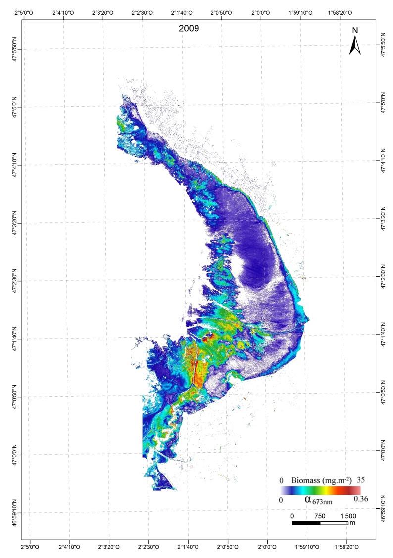 Cartographie du microphytobenthos en Baie de Bourgneuf 2009