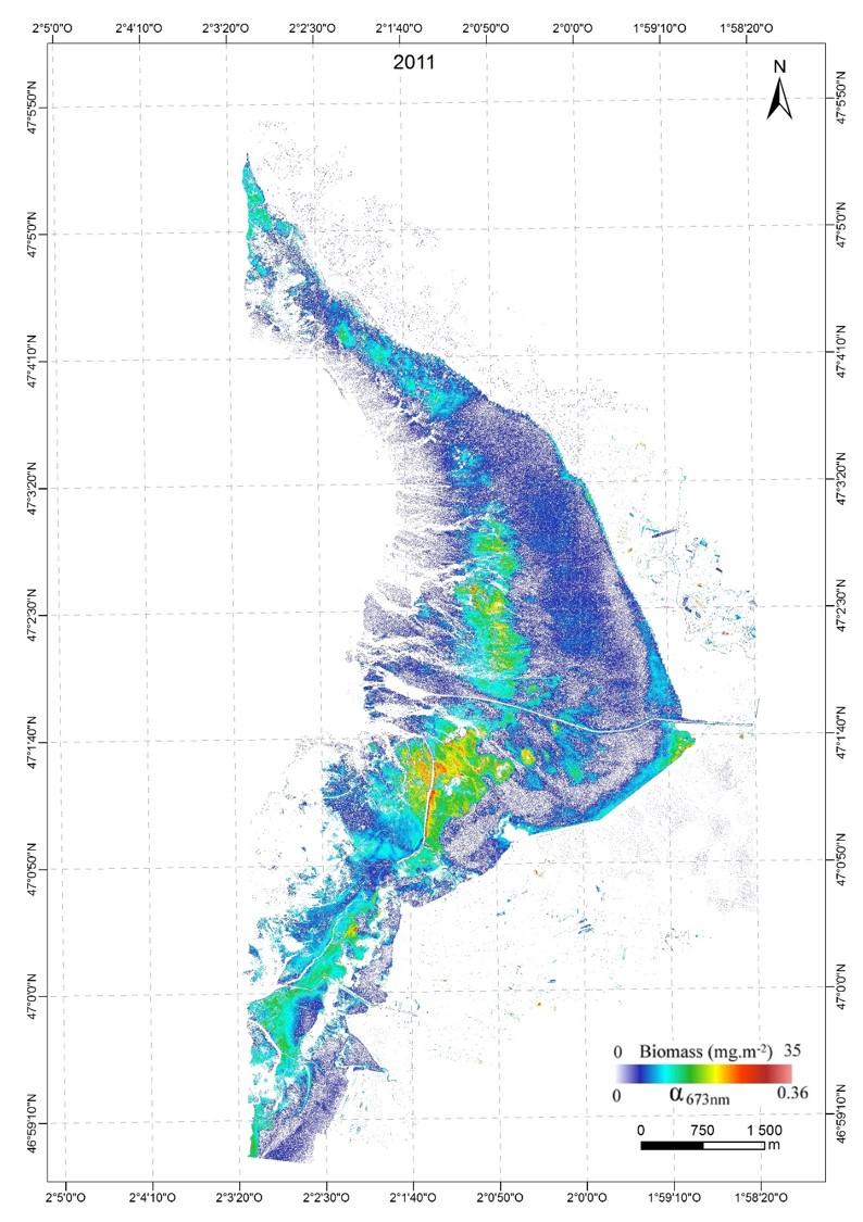 Cartographie du microphytobenthos en Baie de Bourgneuf  2011