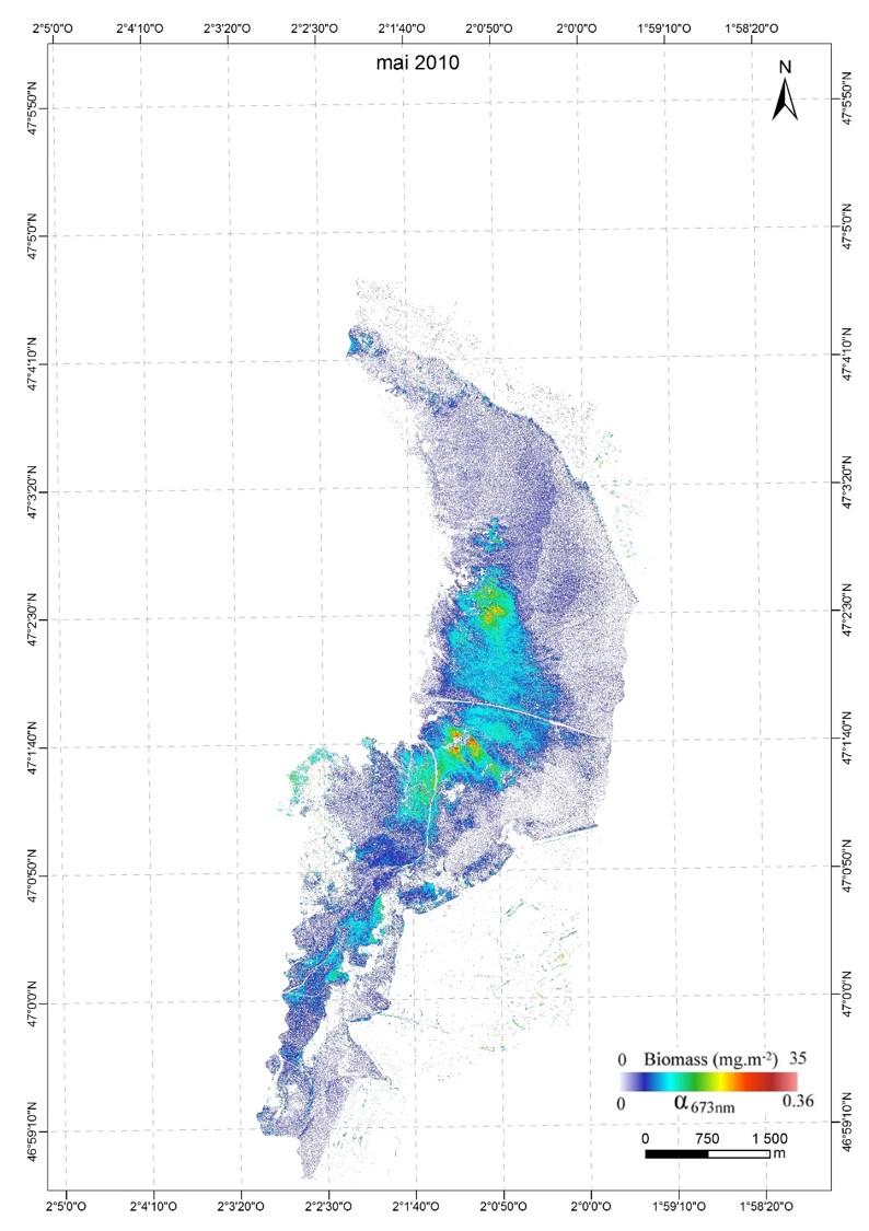 Cartographie du microphytobenthos en Baie de Bourgneuf  mai 2010