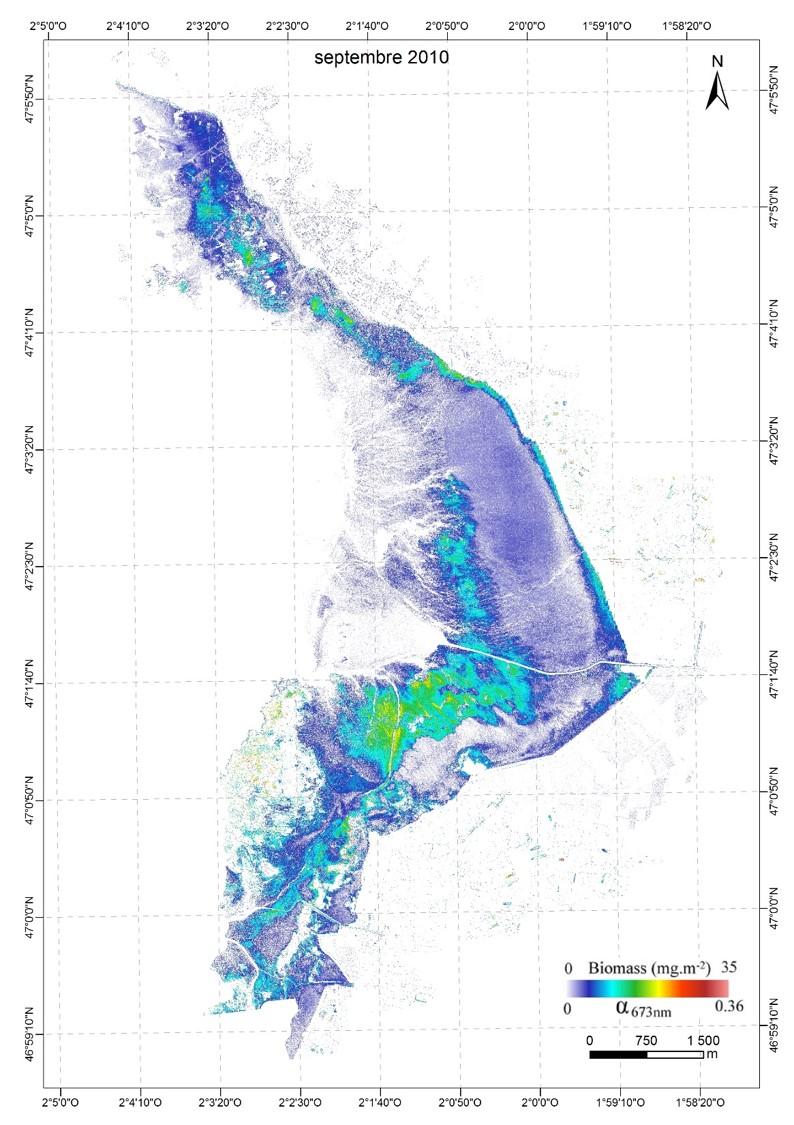 Cartographie du microphytobenthos en Baie de Bourgneuf septembre 2010