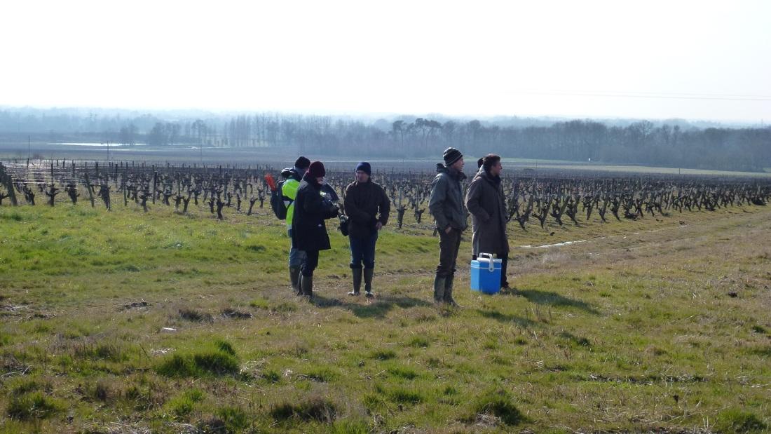 Wine growing sites