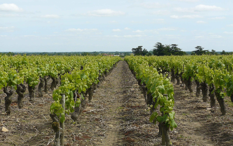 Sites viticoles